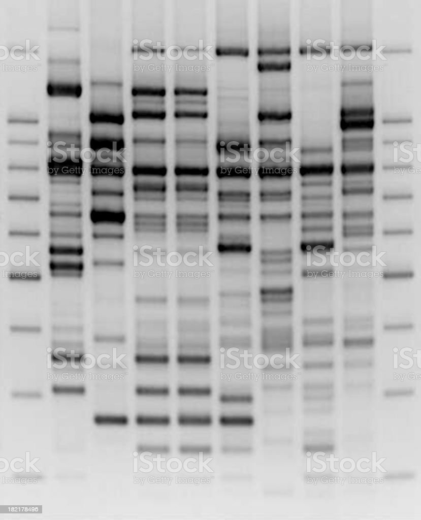 Comparative DNA analysis stock photo
