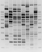 Comparative DNA analysis