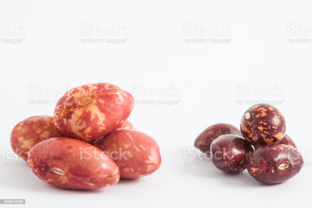 Comparison between dry and soaked bean stock photo