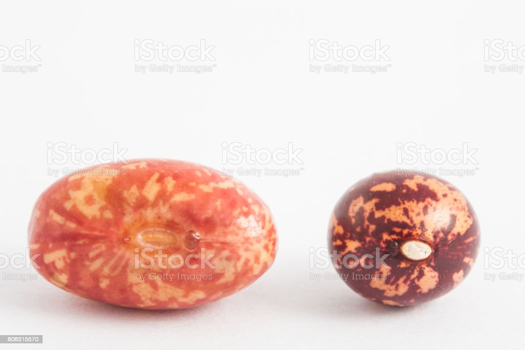 Comparison between dry and soaked beans stock photo