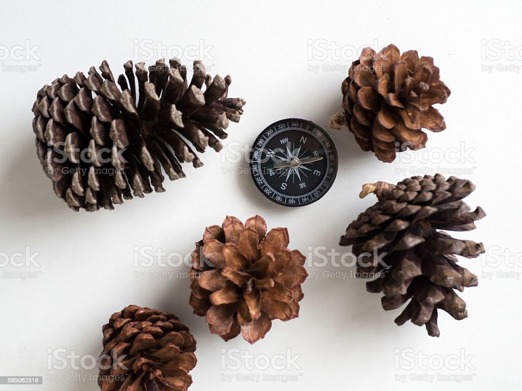 compass and pine cones on white background  travel journey stock photo