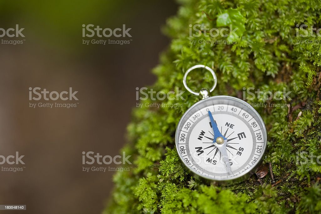 Compass in a forest stock photo