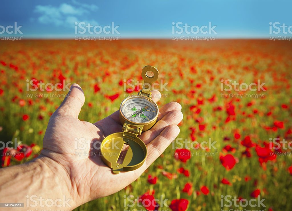 Compass in a Hand / Discovery / Beautiful Day / Red Poppies stock photo
