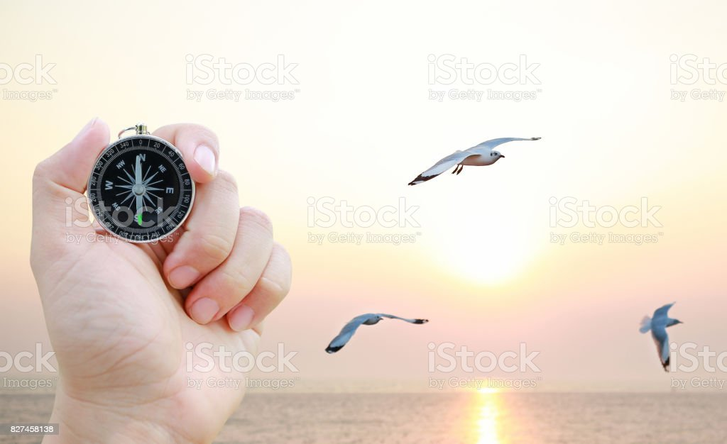 Compass in hand against Seagulls flying in the sky at sunset. stock photo