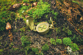 Compass in nature.