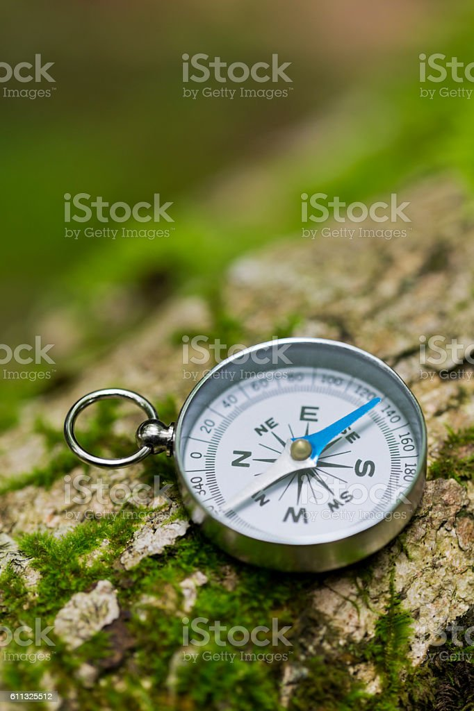 Compass on a Mossy  Fallen Tree in the Forest stock photo