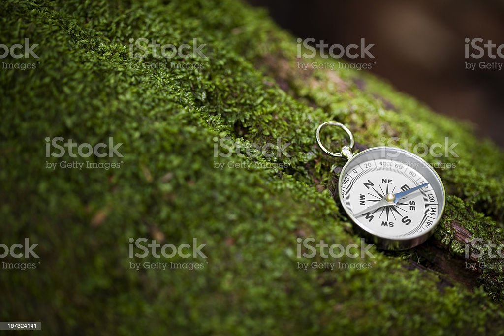 Compass on Mossy Tree with Sunlight stock photo