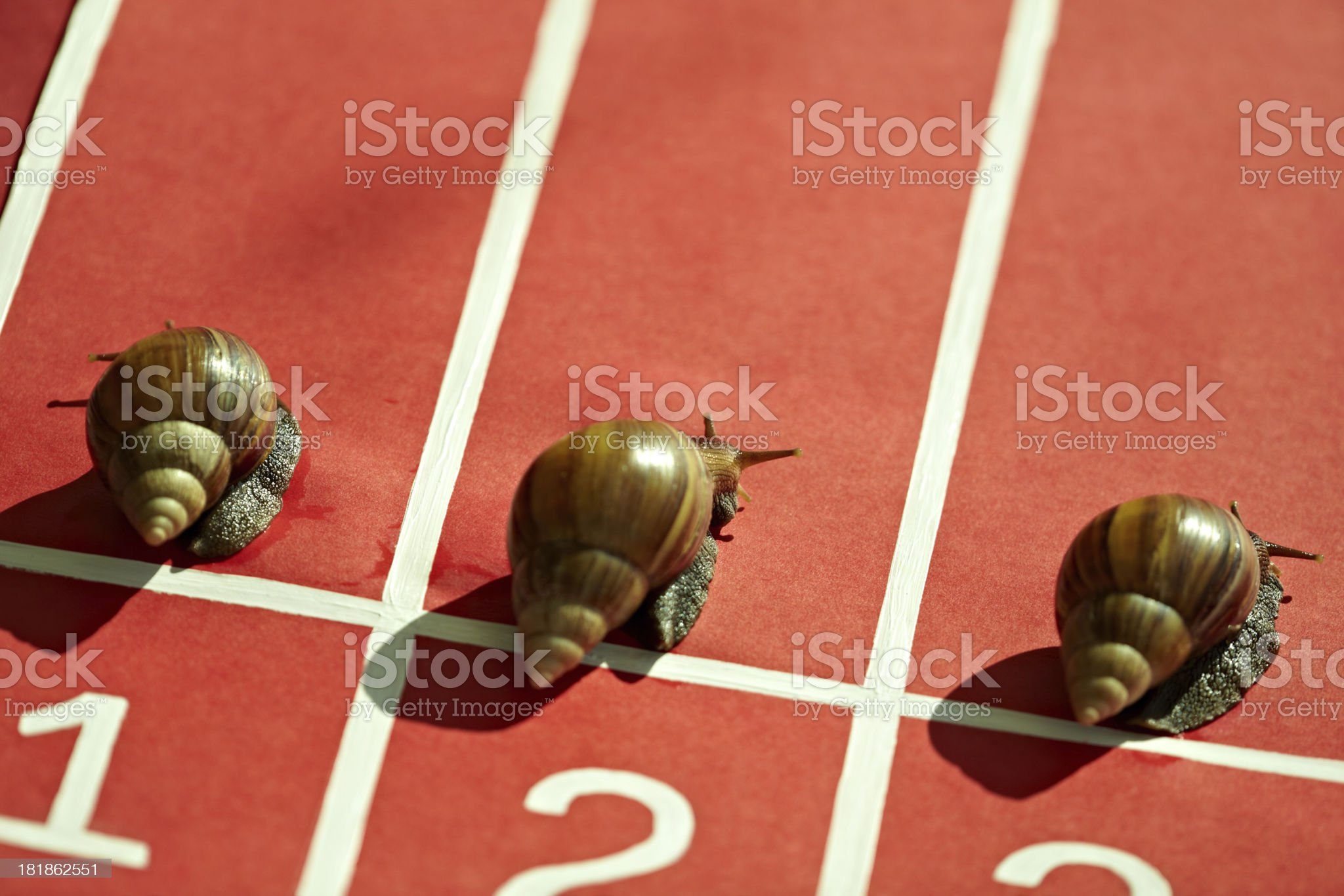 Competing snails royalty-free stock photo