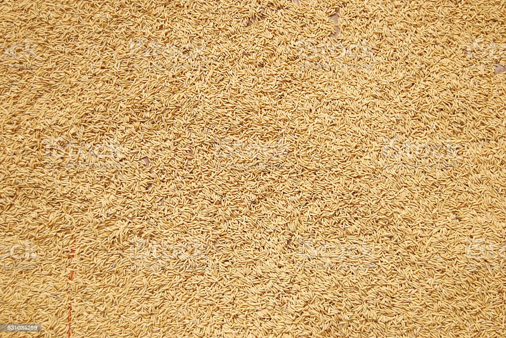 Complete covering of rice stock photo