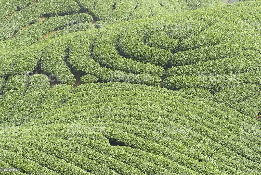 Complex landform and tea trees royalty-free stock photo
