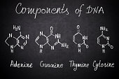 Components of DNA