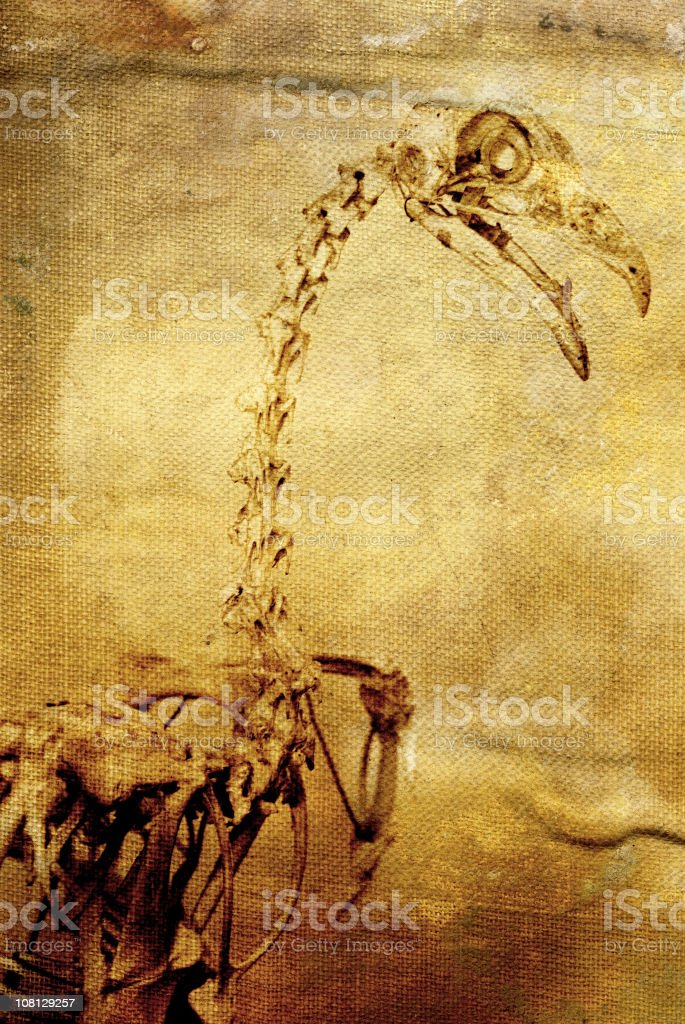 Composite Image of Raptor Skeleton on Old, Yellowing Canvas stock photo