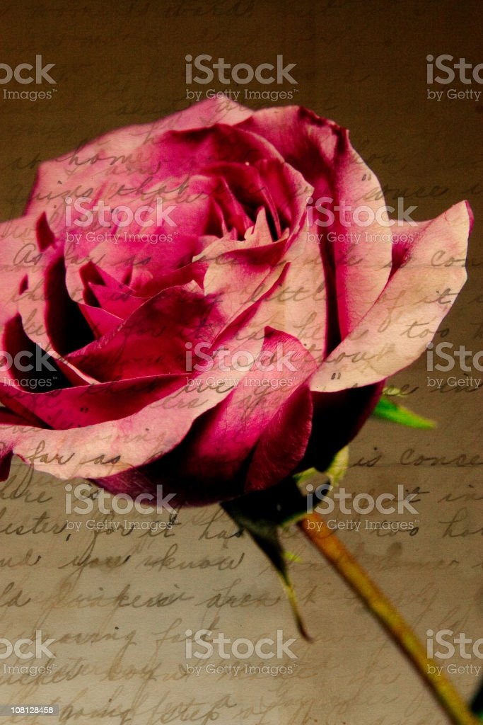 Composite image of rose with antique script royalty-free stock photo