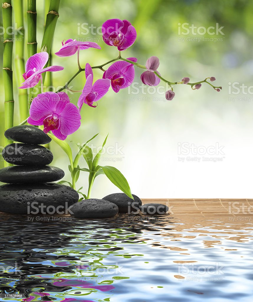 composition bamboo-purple orchid-black stones stock photo