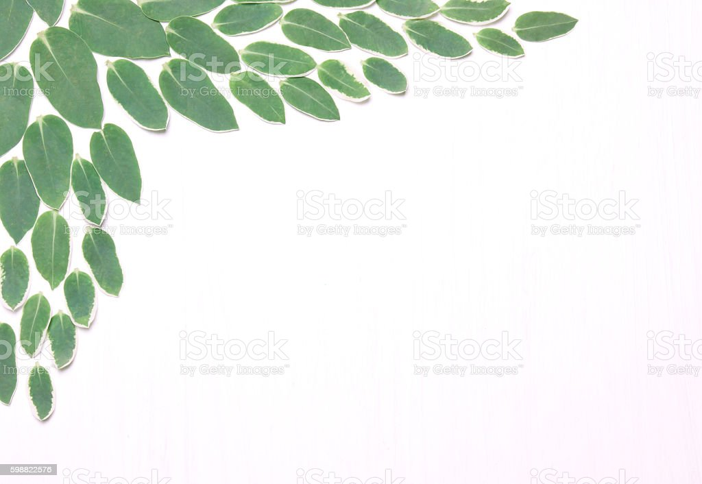 Composition from green leaves stock photo