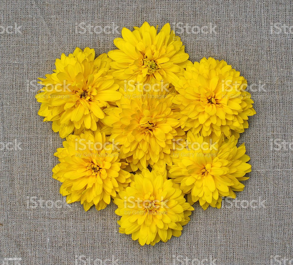 composition in  form of flower of yellow flowers stock photo