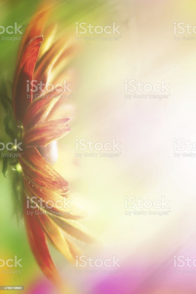 Composition of artistic flower royalty-free stock photo