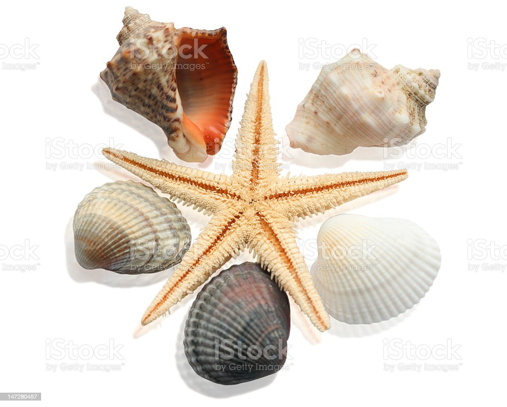 Composition of cockleshells on the white background royalty-free stock photo
