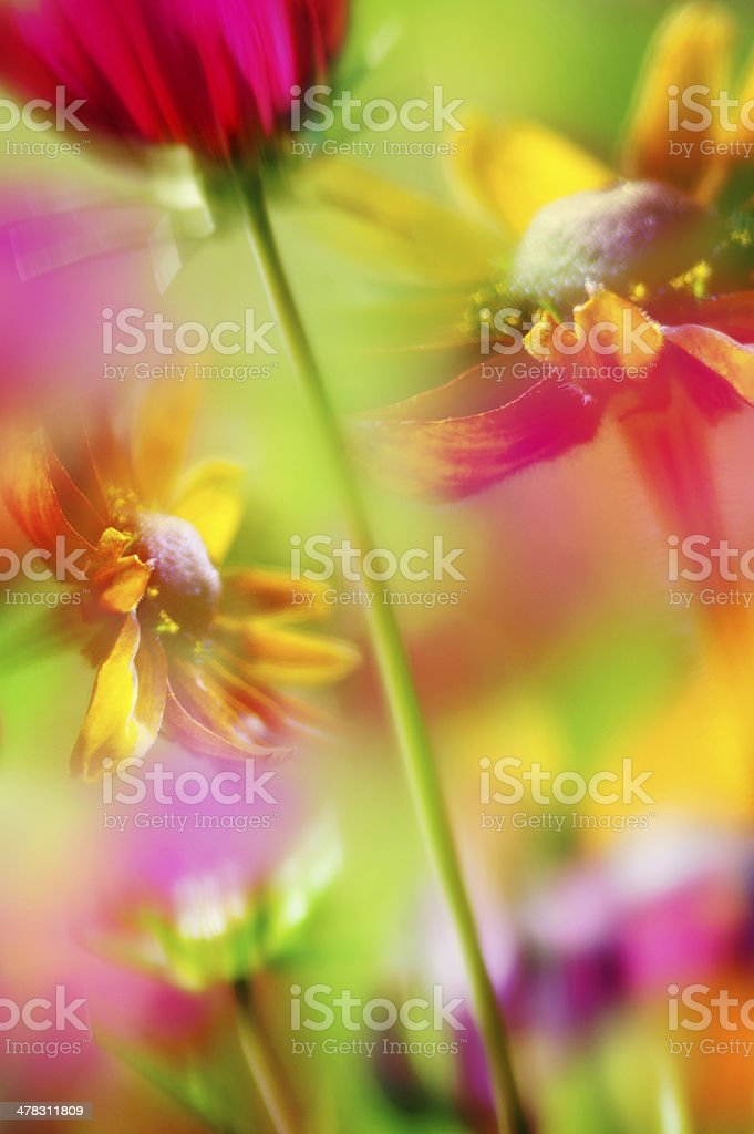 Composition of colorful artistic flower photo royalty-free stock photo