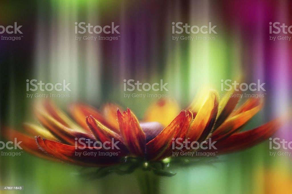 Composition of colorful artistic flower photo texture royalty-free stock photo