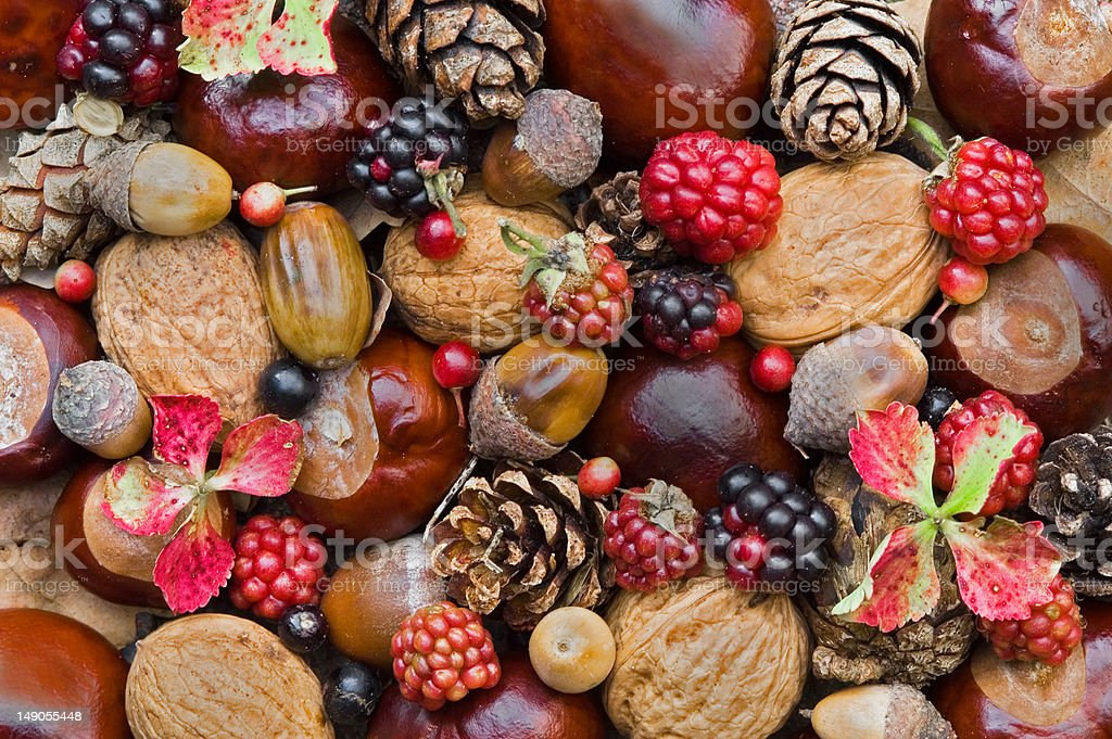 Composition with autumn fruits     (© Lobke Peers) royalty-free stock photo