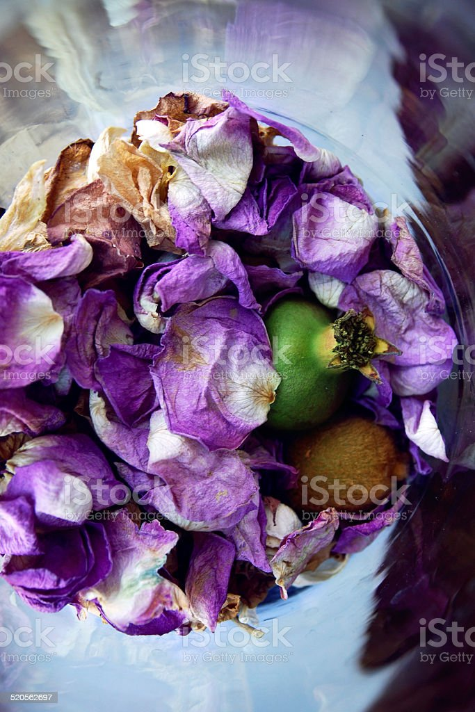 Composition with petals, kiwi and pomegranate stock photo