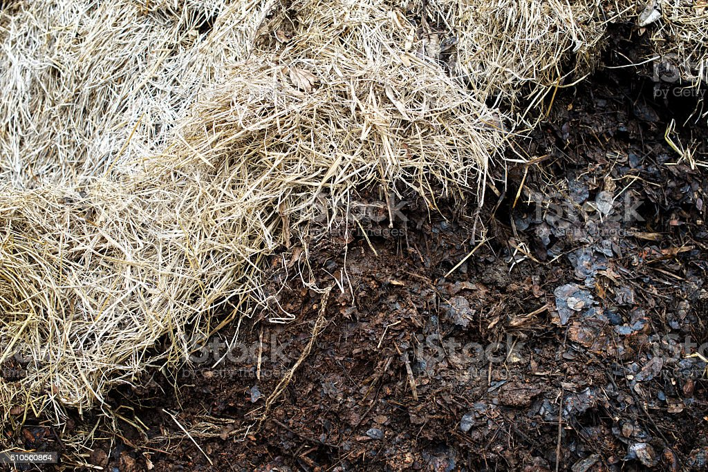 Compost soil, Organic plant fertilizer : closeup stock photo