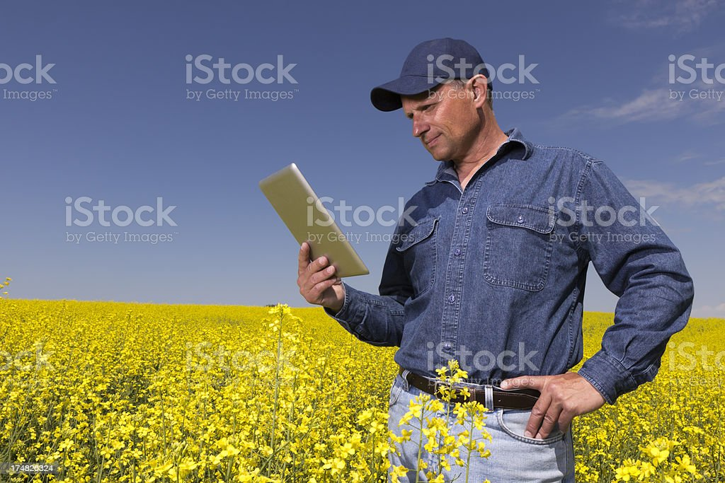 Computer and Canola royalty-free stock photo