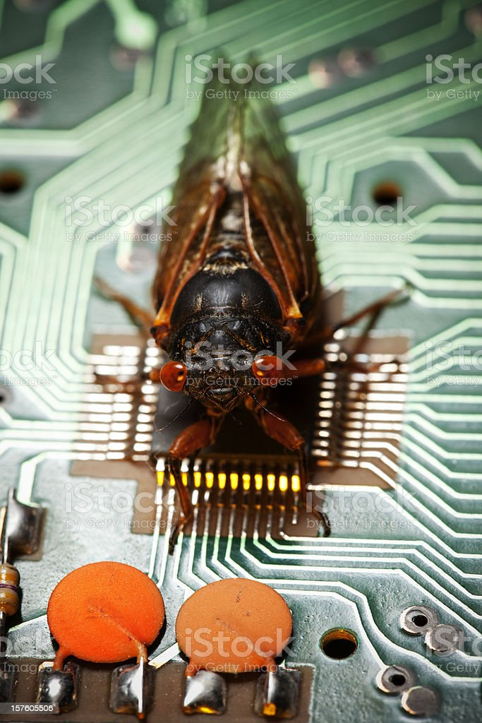 Computer Bug - Virus Concept royalty-free stock photo