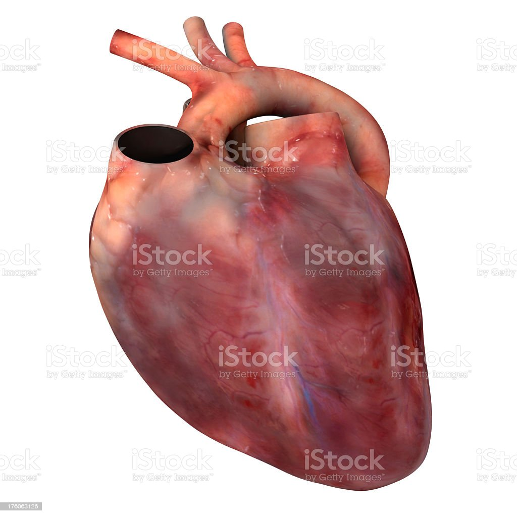 Computer generated image of a human heart royalty-free stock photo