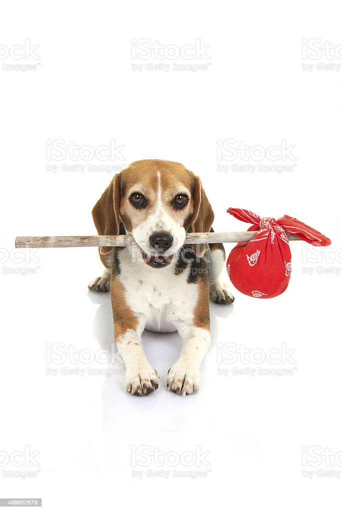 concept for runaway dog , pets holiday home or lost animal stock photo