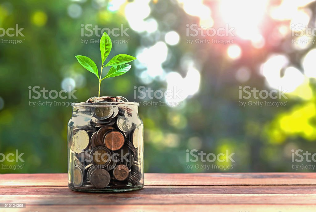 concept money and small tree in jar and sunshine stock photo