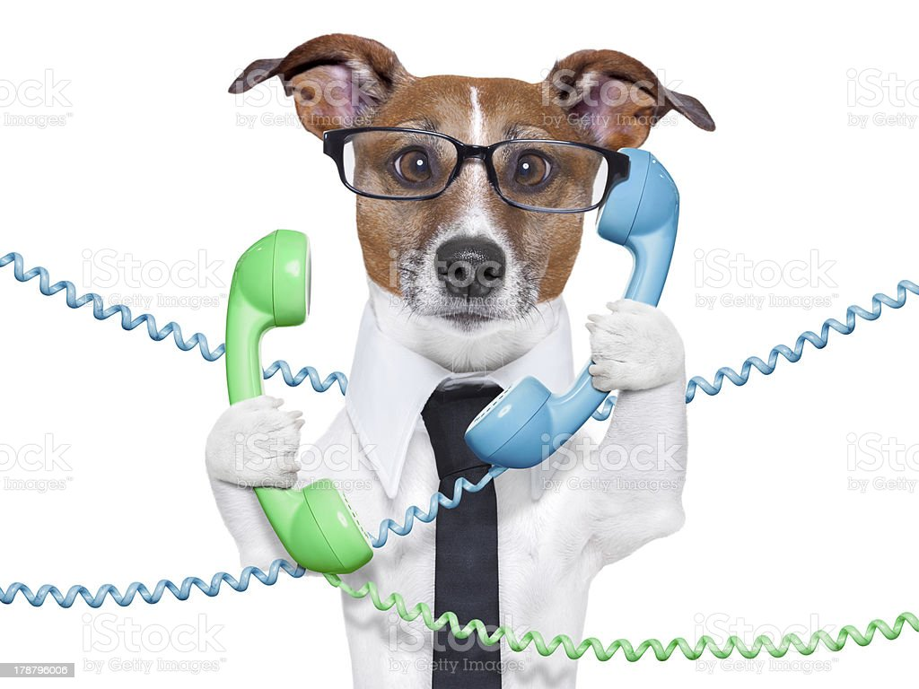 A concept of a busy business dog royalty-free stock photo