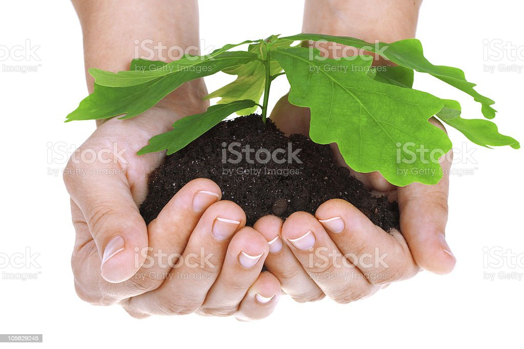 Concept of a young oak tree in woman hands royalty-free stock photo