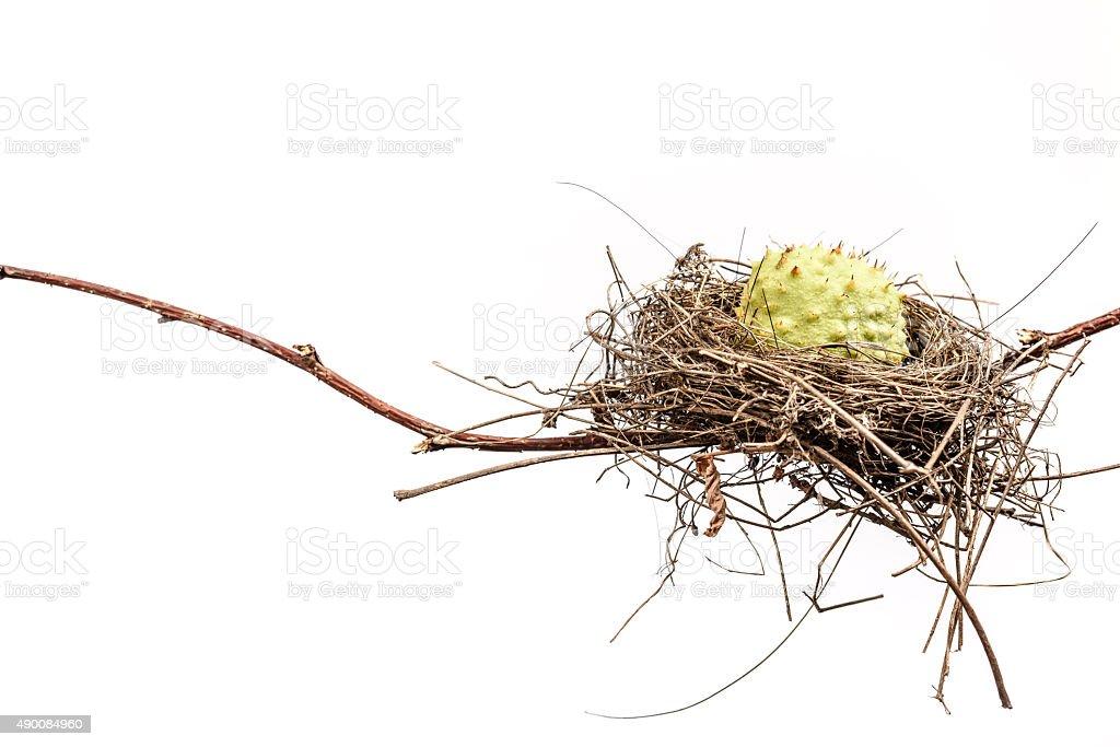 Conceptual Bird Nest. stock photo