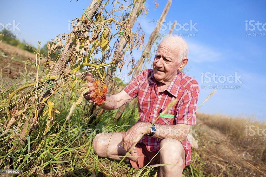 Concerned farmer stock photo