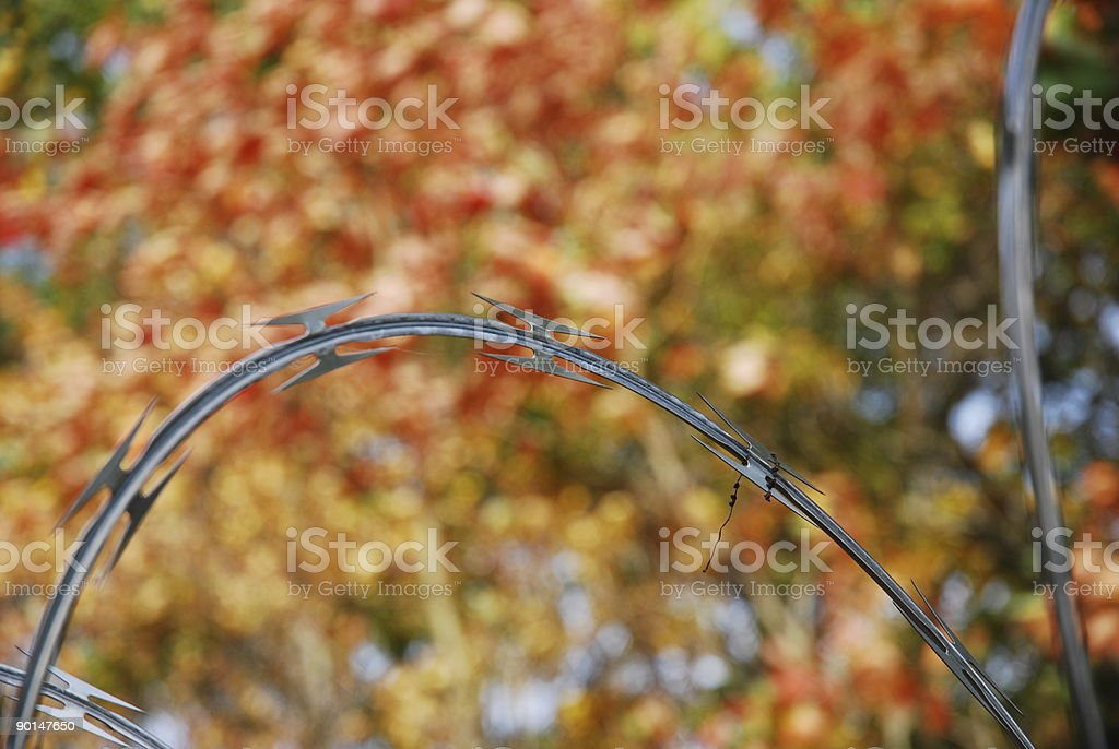 Concertina Wire stock photo