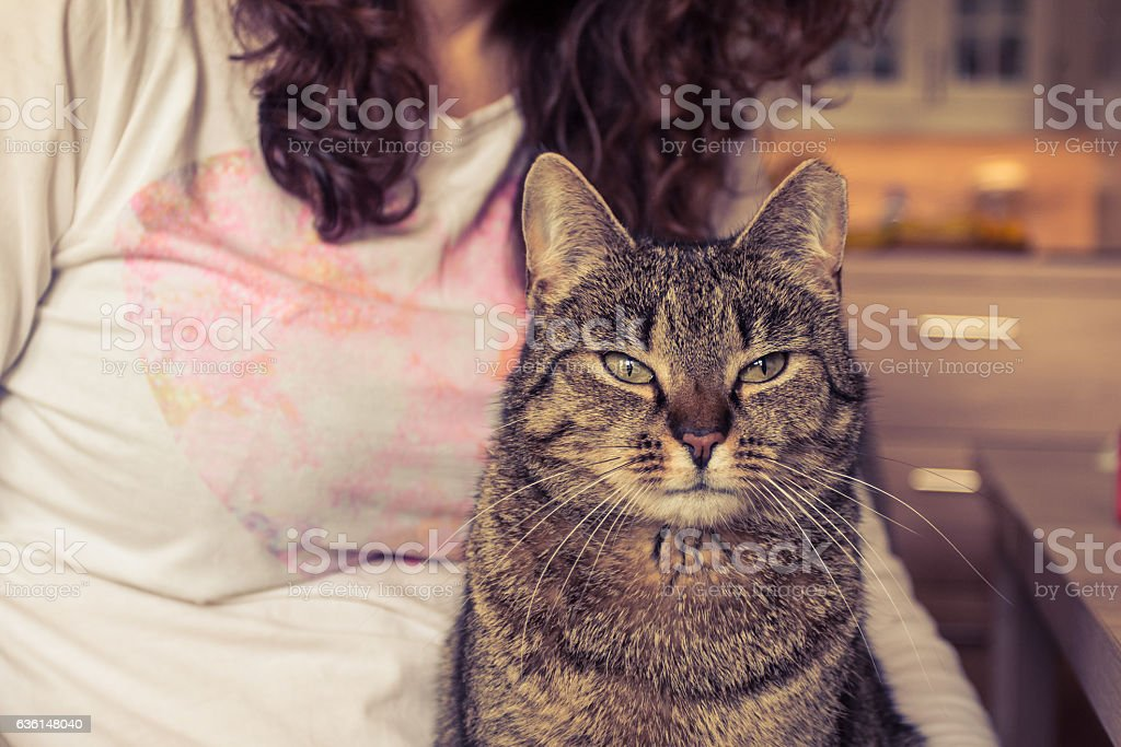 Concetrated cat siting on the lap of a woman. stock photo