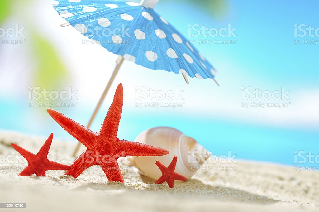 Conch shell and see star on the beach royalty-free stock photo