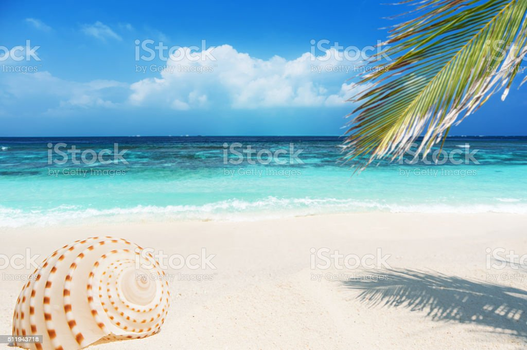 Conch shell at the tropical beach stock photo