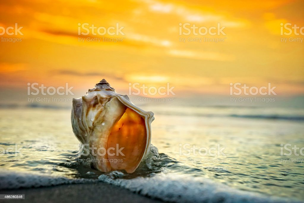 Conch shell, beach and pastel sunrise stock photo