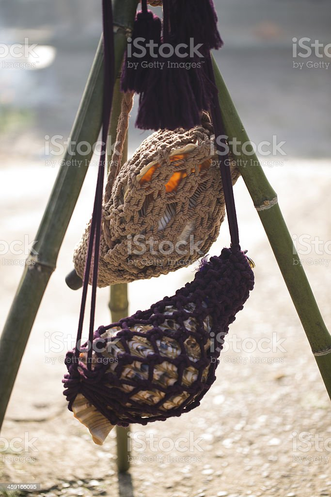 Conch Shell Horns royalty-free stock photo