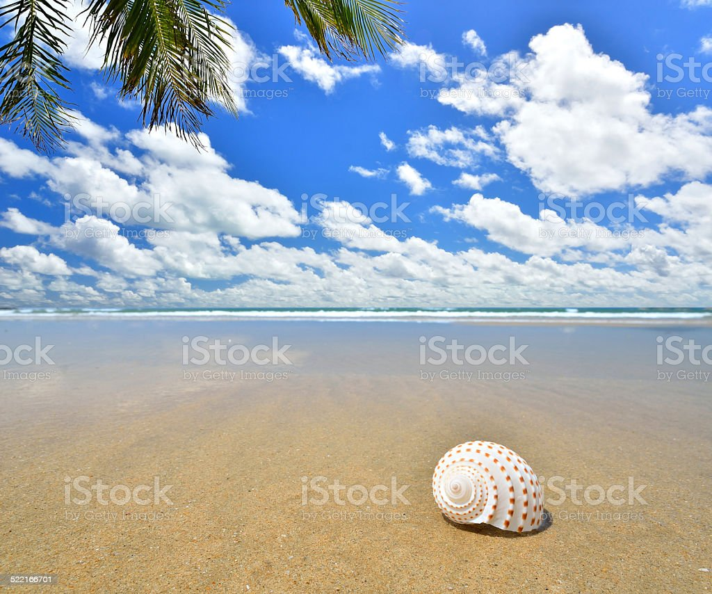 Conch shell on the tropical sandy beach stock photo