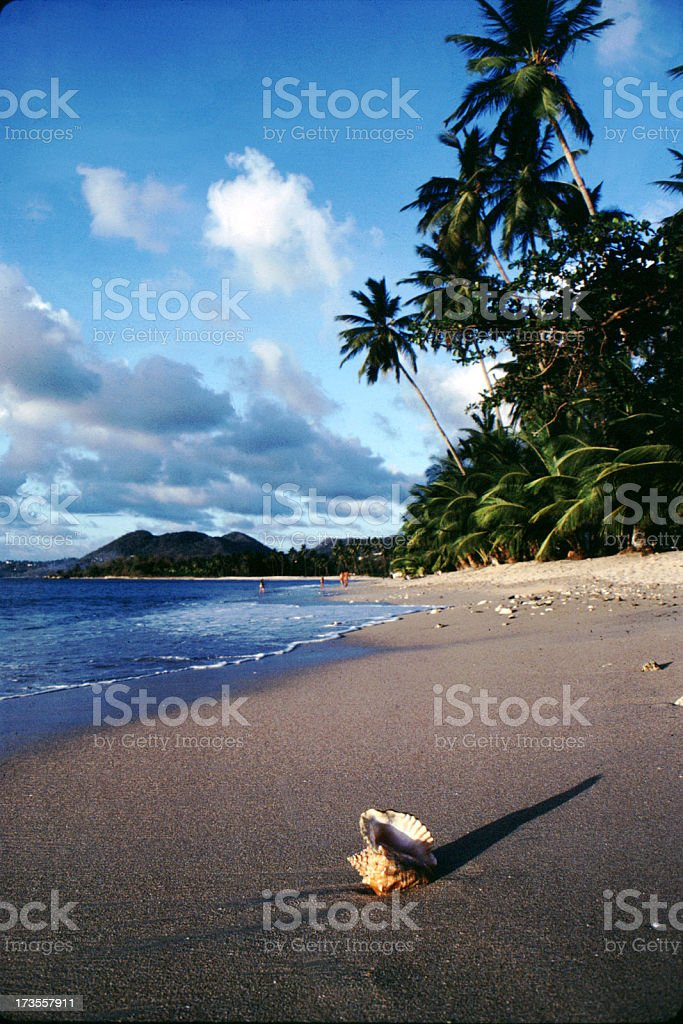 Conch shell on tropical beach royalty-free stock photo