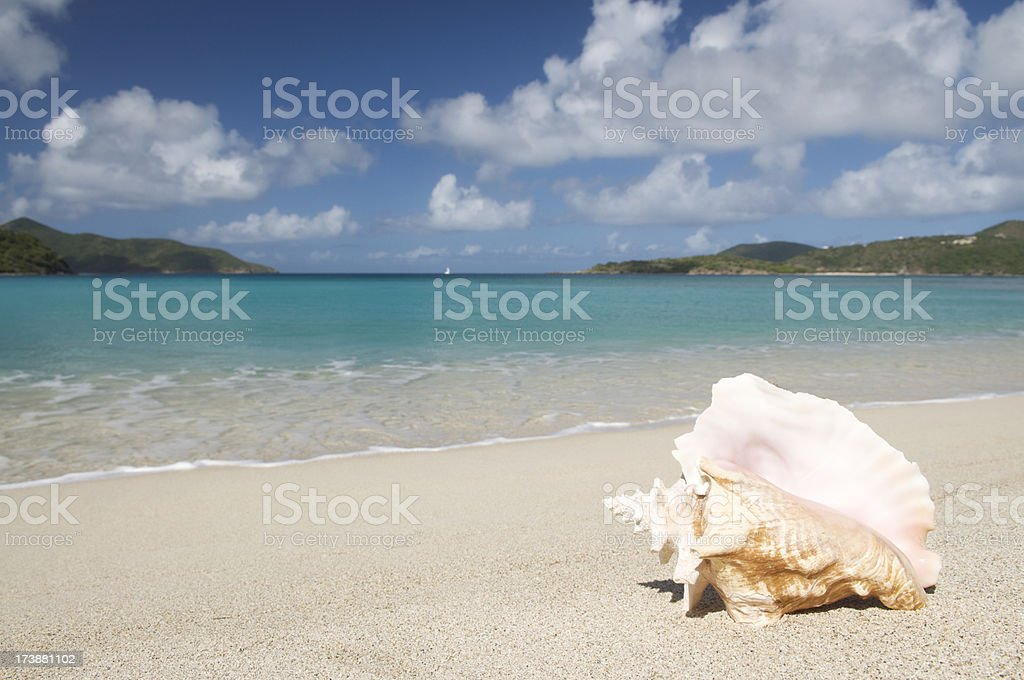 Conch Shell on Tropical Virgin Island Caribbean Beach stock photo
