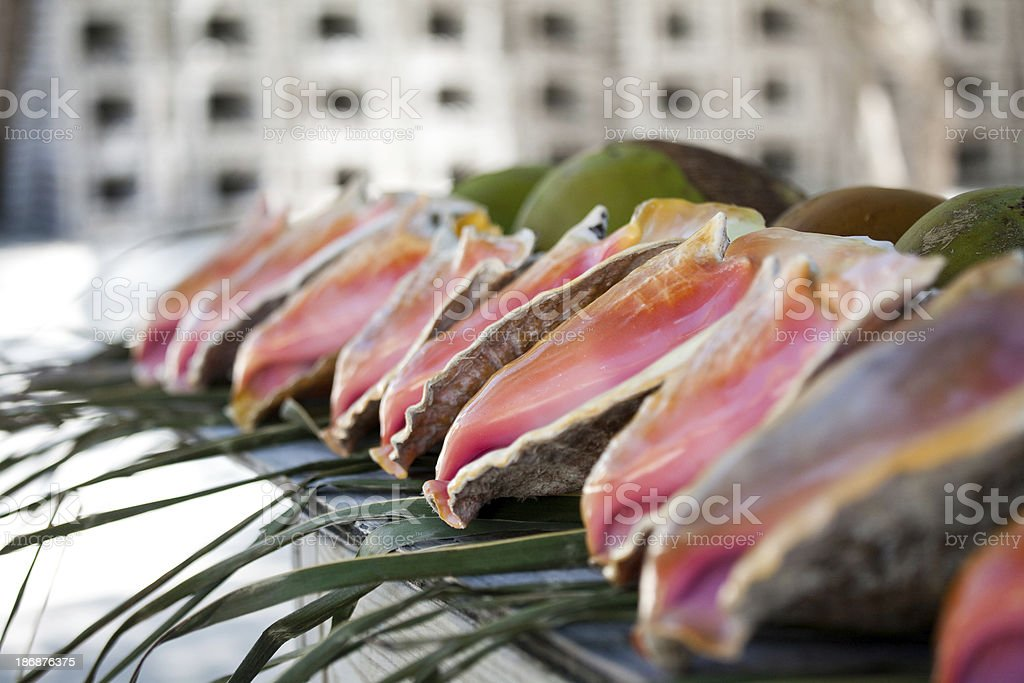 Conch Shell Row royalty-free stock photo