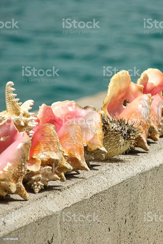 Conch Shells, Starfish, and Puffer Fish for Sale stock photo