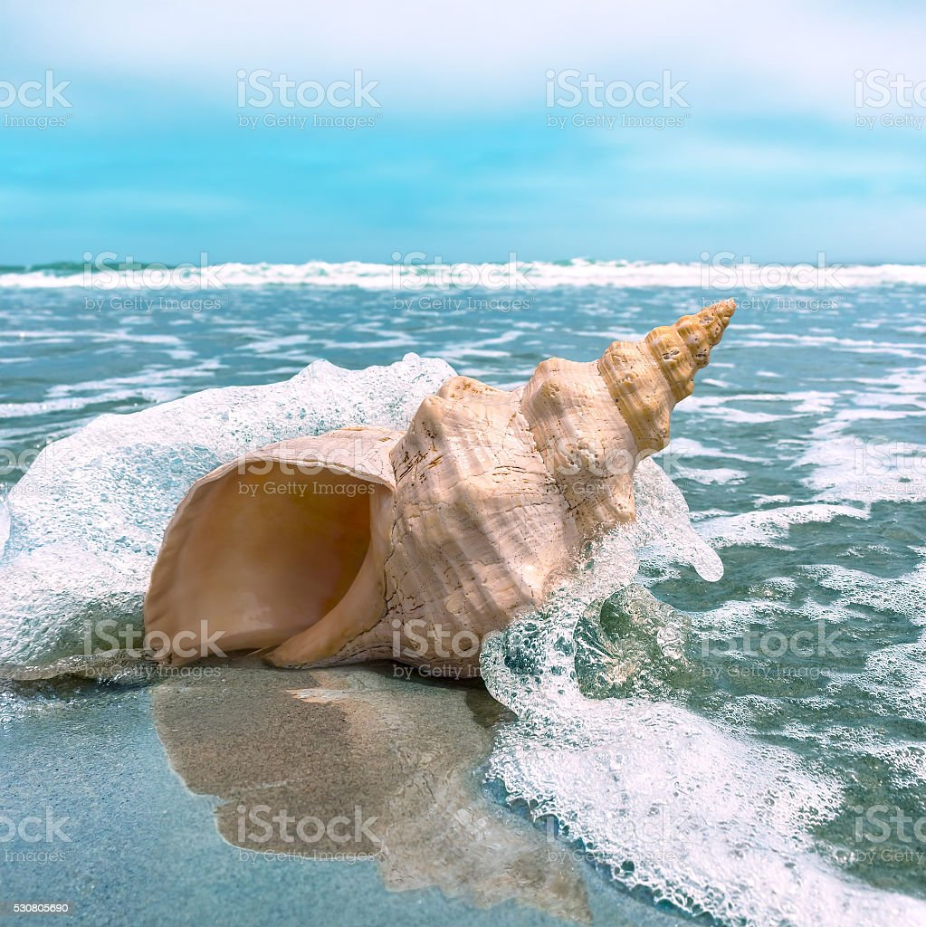 Conch Splash stock photo