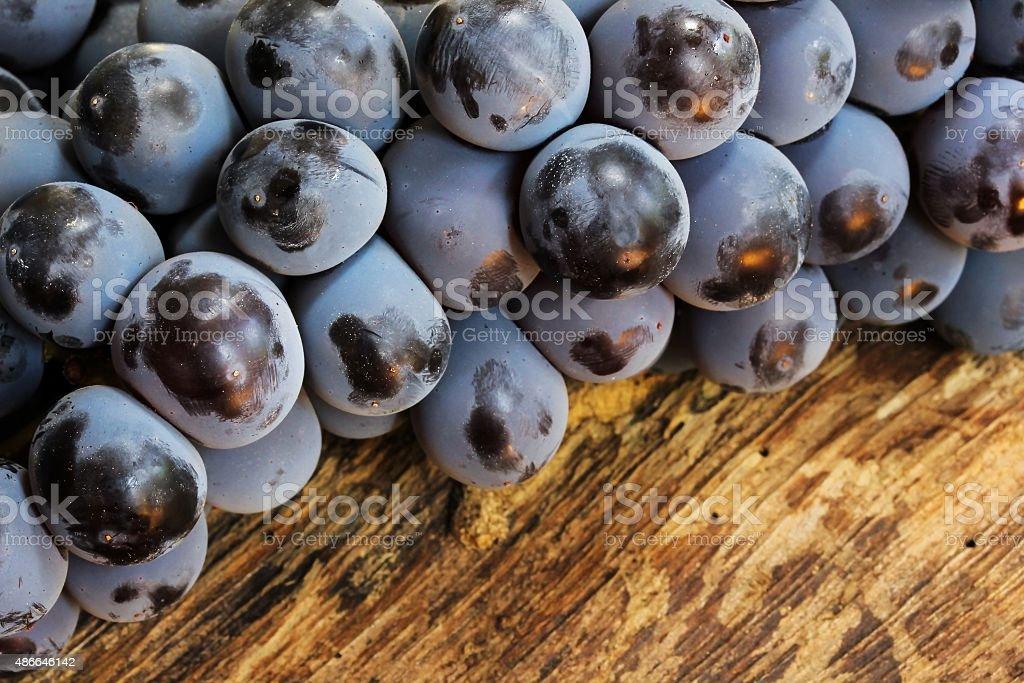 Concord grapes stock photo