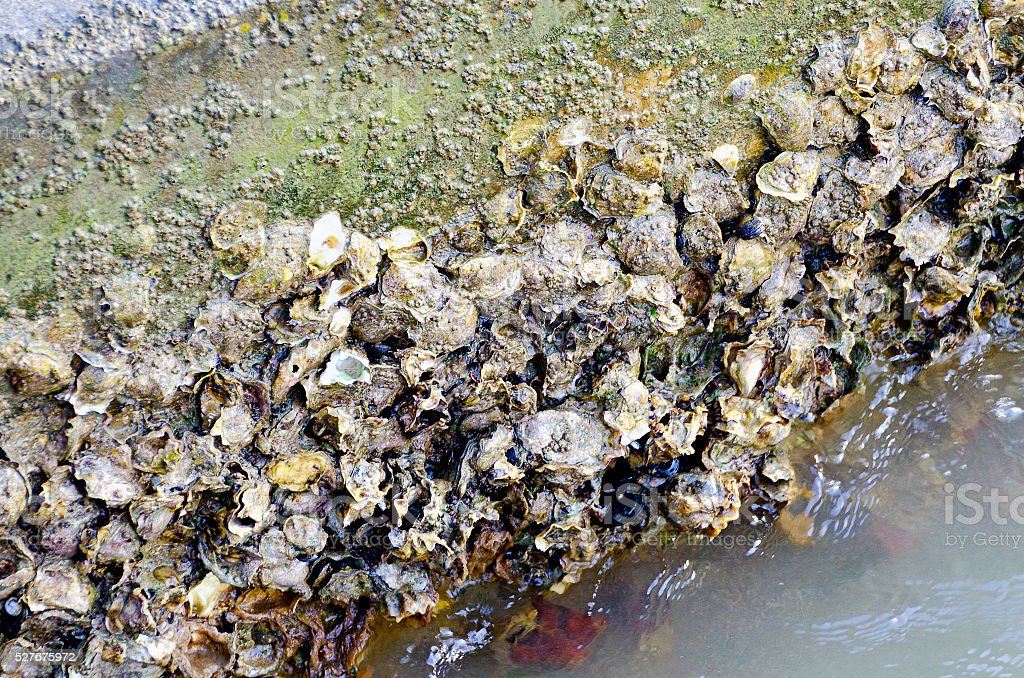 concrete base covered by shells stock photo
